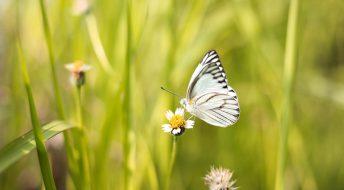 Kies voor een natuurlijke tuin