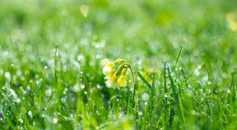 Voorjaar graszoden